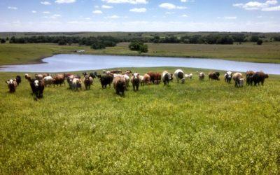 Meet Local Farmer: Kevin Fulton of Fulton Farms