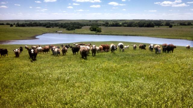 Fulton Farms Pasture