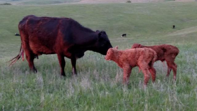 fulton farms nebraska