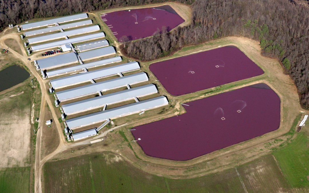 north-carolina-hog-farm-Waterkeeper Alliance