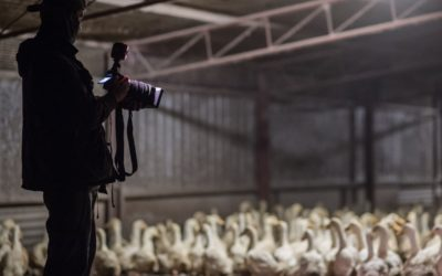 What are Ag Gag Laws & Why You Should Care