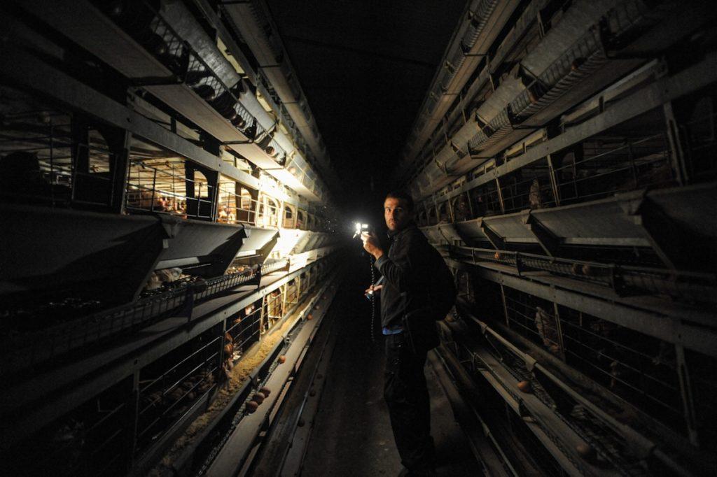 Farm Animal investigations
