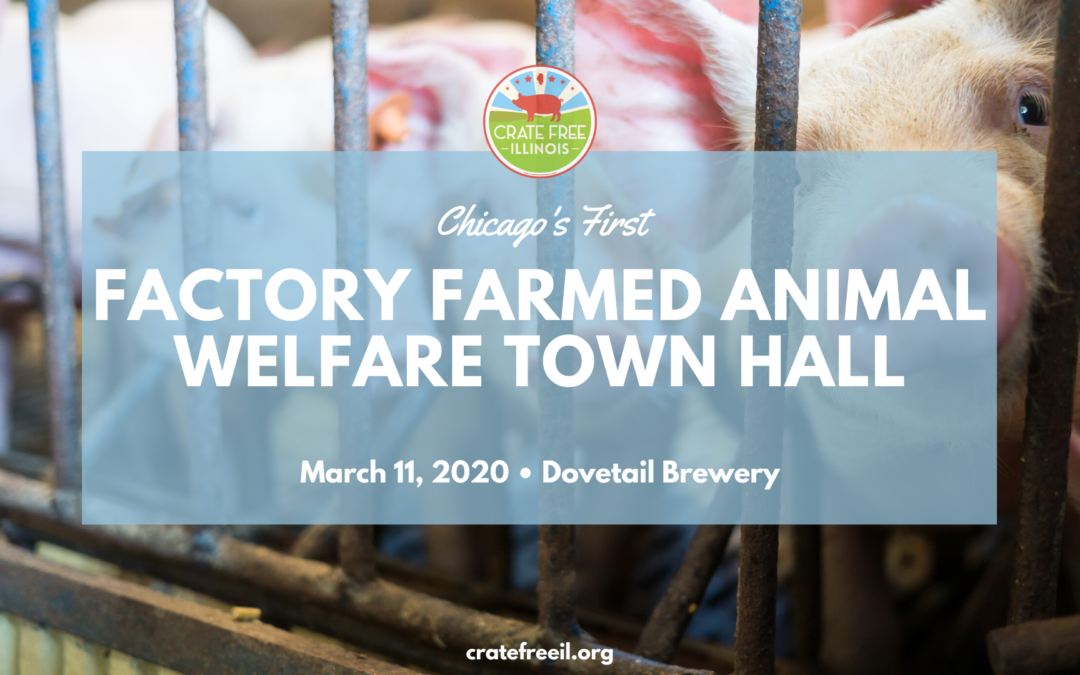 Chicago's First Factory Farmed Animal Welfare Town Hall