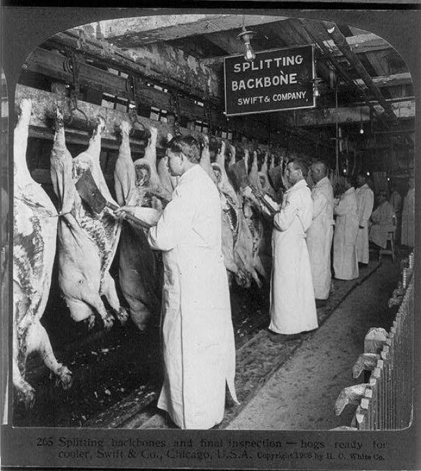 Chicago Slaughterhouse