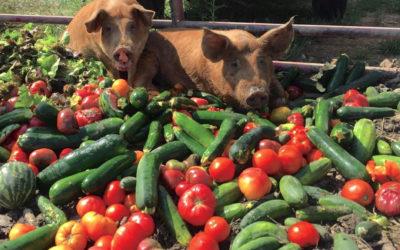 Meet Local Farmer: Dave Bishop of PrairiErth Farm