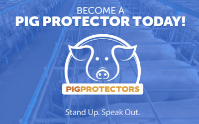 Become a Pig Protector!