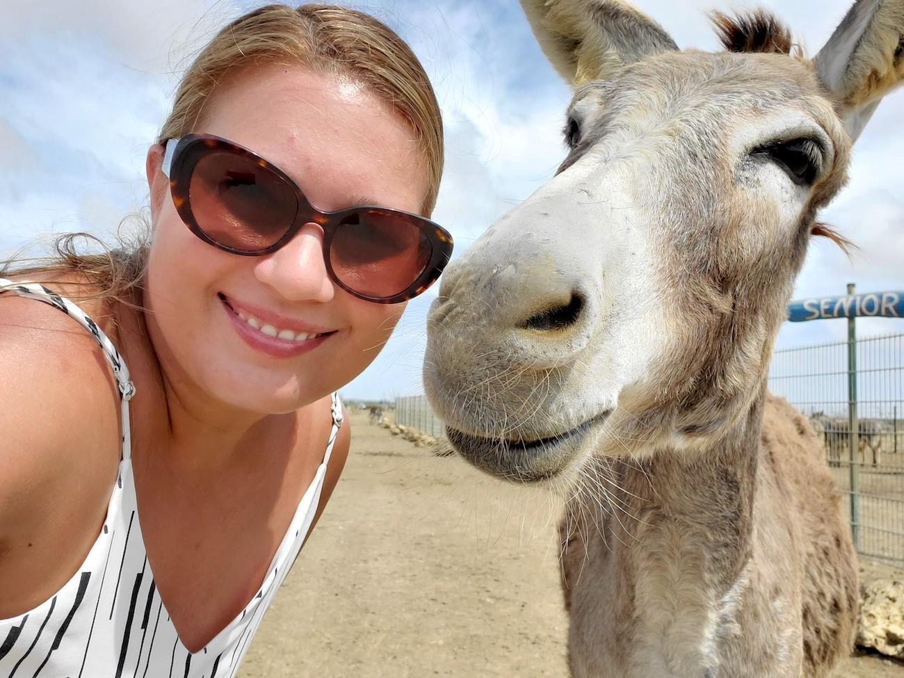 Senior Donkey
