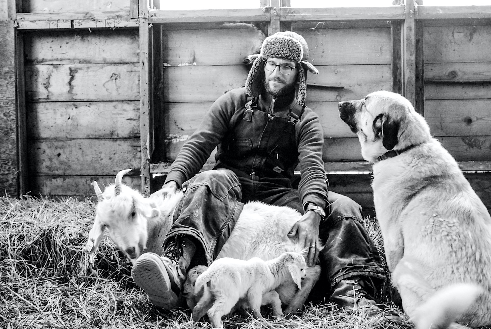 Mike and Goats