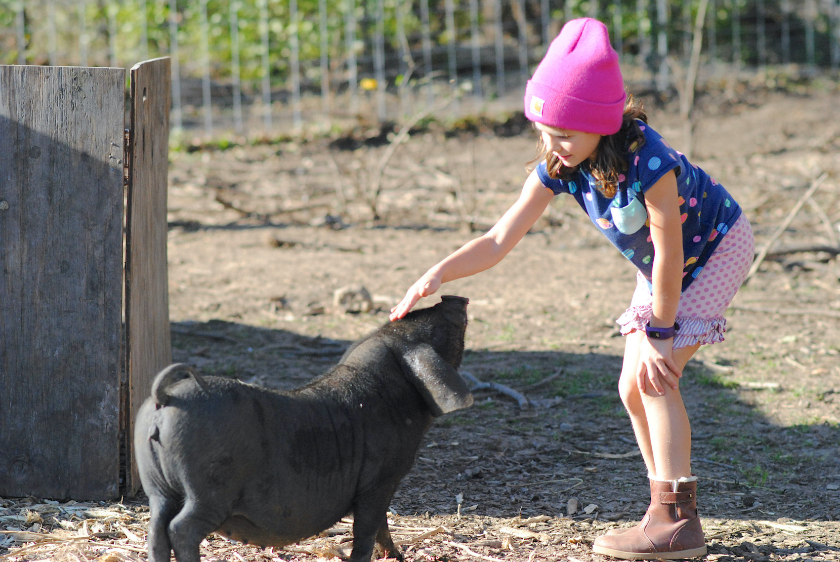 maddie with Pig